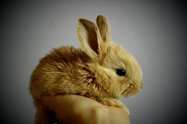 best pets for kids - bunny rabbit