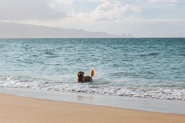 Dog having fun in the sea