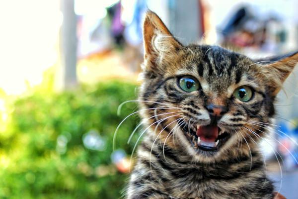 Kitty Showing teeth