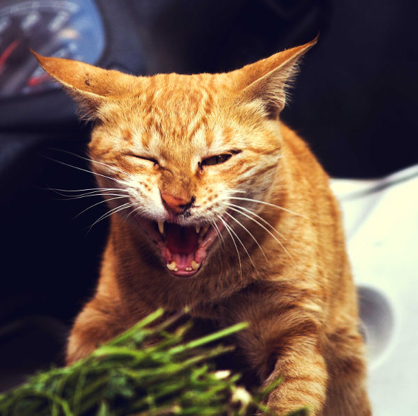 how-to-teach-your-cat-not-to-eat-plants