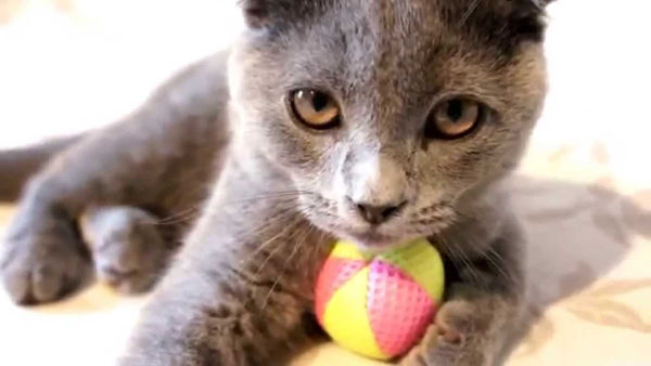how to teach your cat to play nice