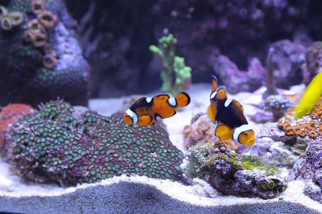environment your suntan change fish what