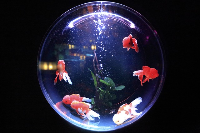 fish in a fish bowl