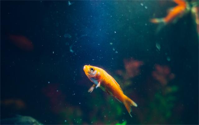 is it a fish?