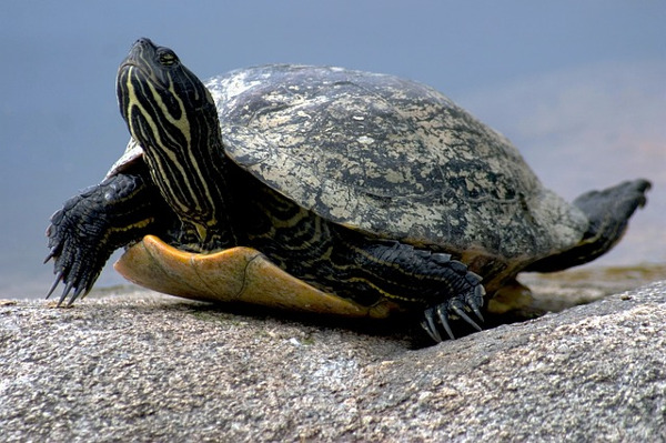 best pets for kids - turtle