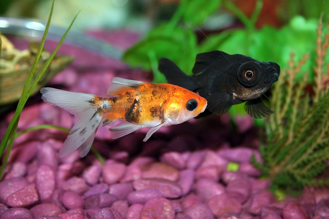 fish and a friend - another fish